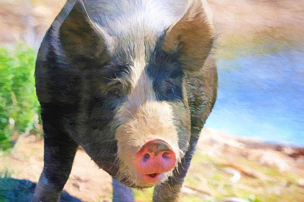Pig Photograph - A Little Bit Snooty by Donna Kennedy