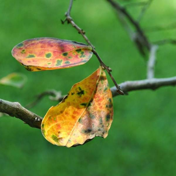 Photograph - A Little Color by Cheray Dillon