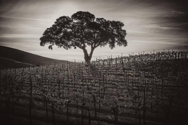 Grapevine Photograph - A Little More Quiet by Joseph Smith