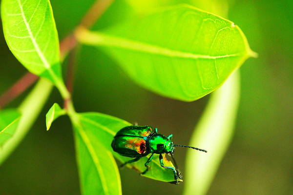 Wall Art - Photograph - A Little Red Beatle by Jeff Swan