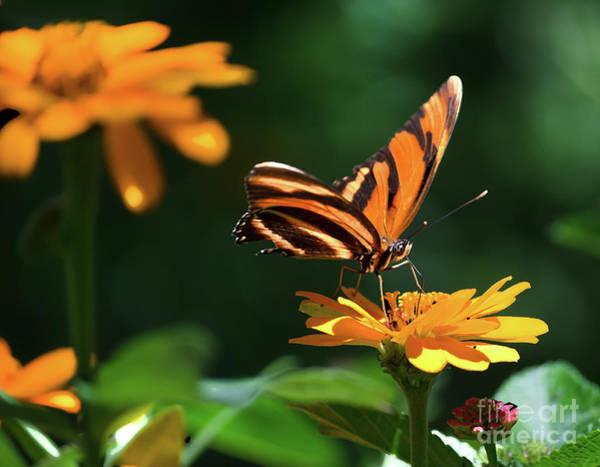 Photograph - A Little Sip Of Nectar by Susan Warren