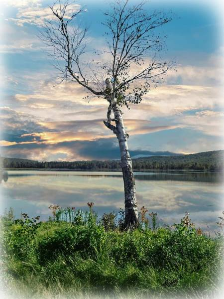Digital Art - A Lone Birch Tree On A Lake. by Rusty R Smith