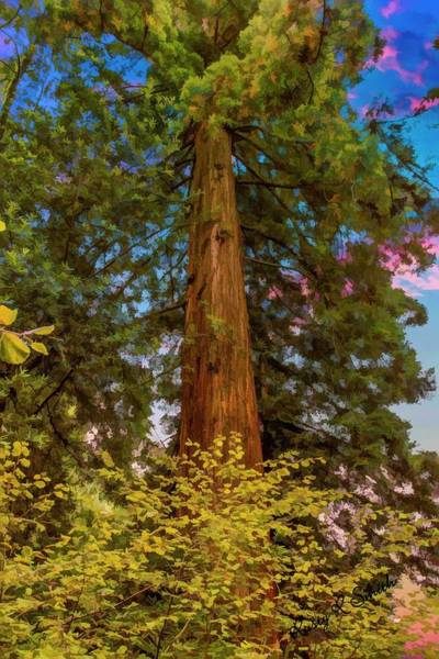 Digital Art - A Lone Redwood Tree Standing Tall And Strong. by Rusty R Smith