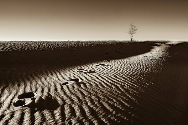 Wall Art - Photograph - A Lone Tree On A Sand Dune  - Sepia - Monahans, Texas by Ellie Teramoto