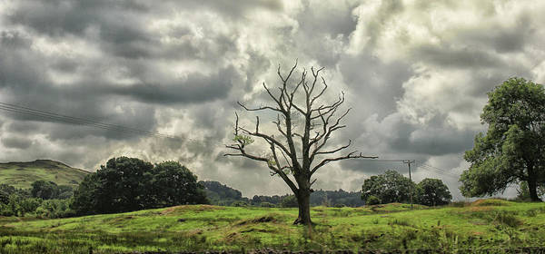 Lake District Wall Art - Photograph - A Lonesome Tree by Martin Newman