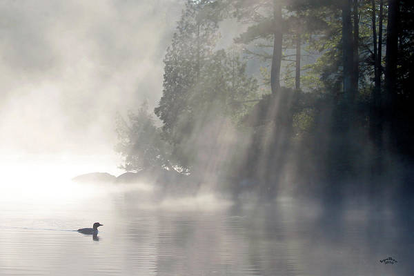 Loon Photograph - A Loon In The Mist by Brian Pelkey