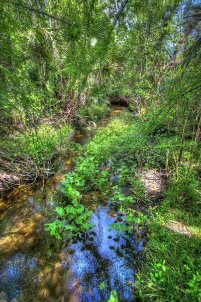 Wall Art - Photograph - A Lush Tropical Creek  by W Chris Fooshee