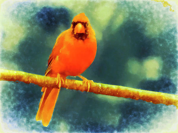 Photograph - A Male Cardinal Perching On A Limb, by Rusty R Smith