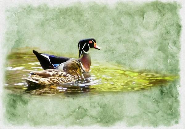 Digital Art - A Male Woodduck And Female Mallard Swimming Together. by Rusty R Smith