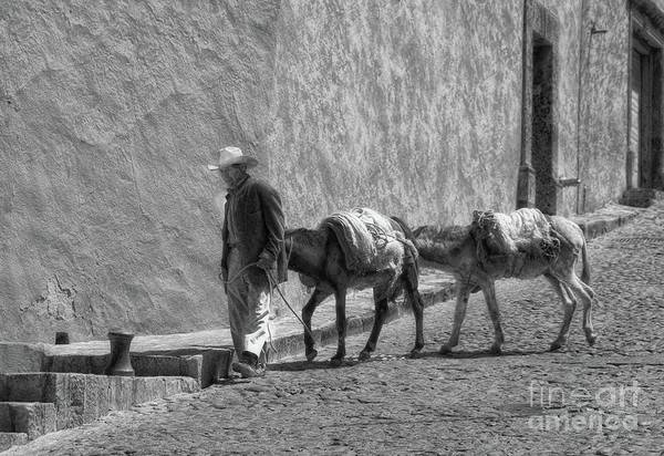 Photograph - A Man With Two Burros by John Kolenberg