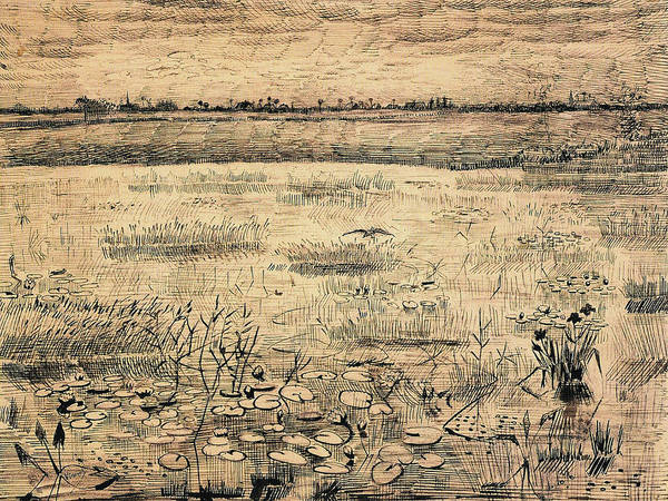 Wall Art - Painting - A Marsh With Water Lillies, 1881 by Vincent Van Gogh