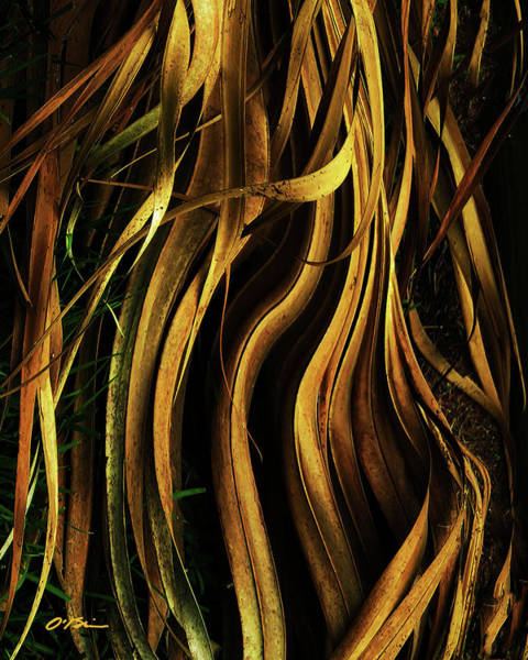 Palm Frond Digital Art - A Matter Of Death And Life by Claudia O'Brien
