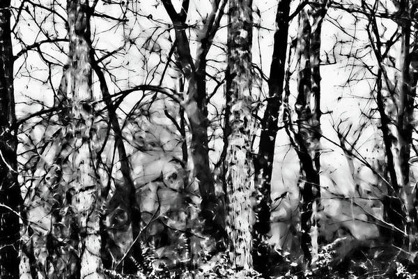 Photograph - A Meeting Of The Trees by Gina O'Brien