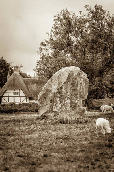English Countryside Photograph - A Megalith And Sheep by W Chris Fooshee