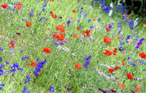 Wild Poppies Digital Art - A Merrie Medley In Wildflowers by Pamela Smale Williams