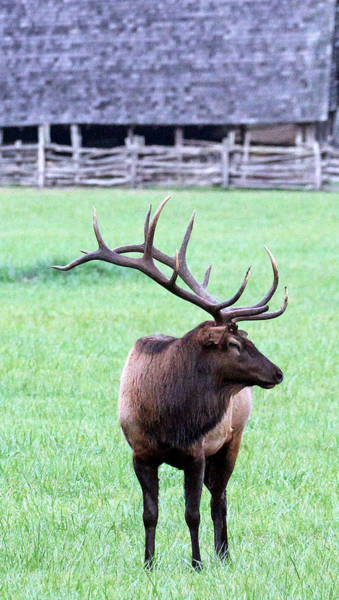 Photograph - A Mighty Bull by Jennifer Robin