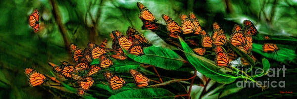 Photograph - A Moment At The Monarch Grove Sanctuary by Blake Richards