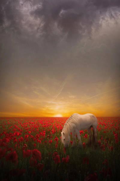 Poppies Digital Art - A Moment In The Poppy Field by Jennifer Woodward