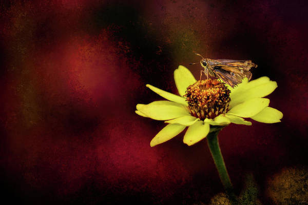 Photograph - A Moment Of Rest by Jai Johnson