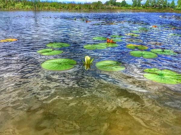 Photograph - A Monet Moment by Nick Heap