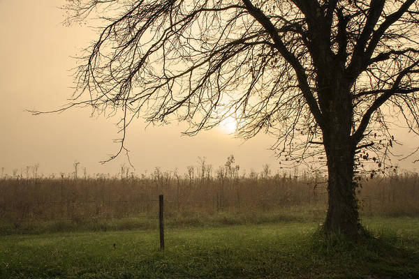 Wall Art - Photograph - A Morning Glow by Lana Trussell