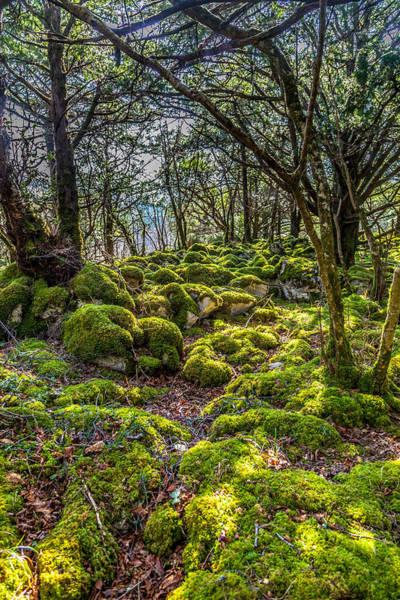 Wall Art - Photograph - A Mossy Walk by W Chris Fooshee