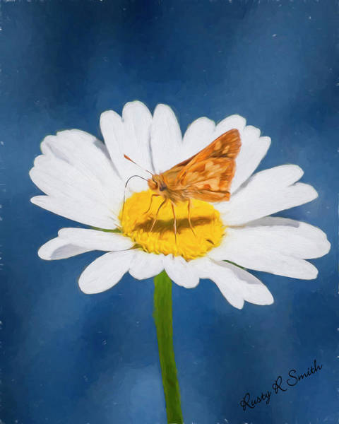 Photograph - A Moth Collects Pollen On A Single Daisy Blossom. by Rusty R Smith