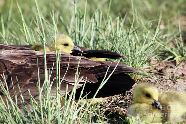 Lethbridge Photograph - A Mother's Love by Alyce Taylor
