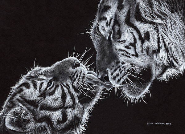 Bengal Tiger Drawing - A Mothers Love by Sarah Stribbling