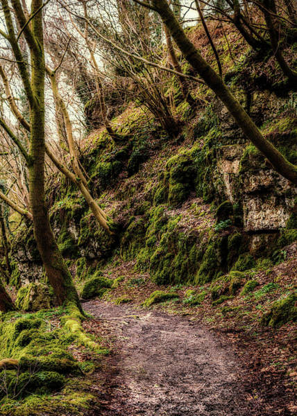 Photograph - A Muddy Path by Nick Bywater