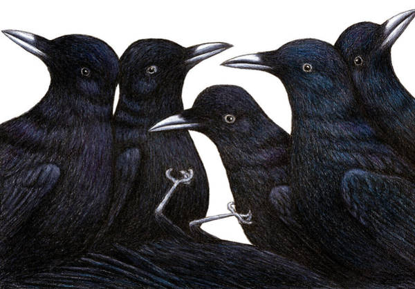 Wall Art - Drawing - A Murder Of Crows by Don McMahon