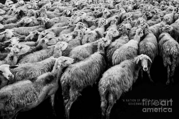 Quotation Photograph - A Nation Of Sheep by Edward Fielding