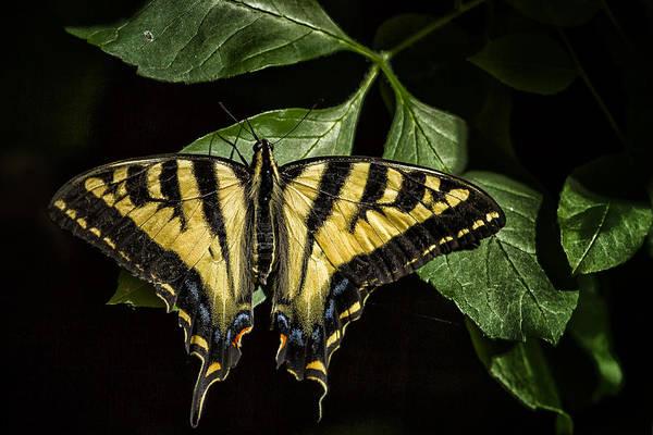 Photograph - A Natural Design by Belinda Greb