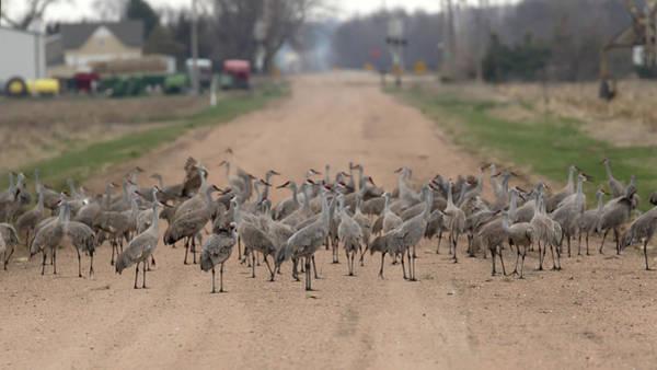Photograph - A Nebraska Roadblock by Susan Rissi Tregoning