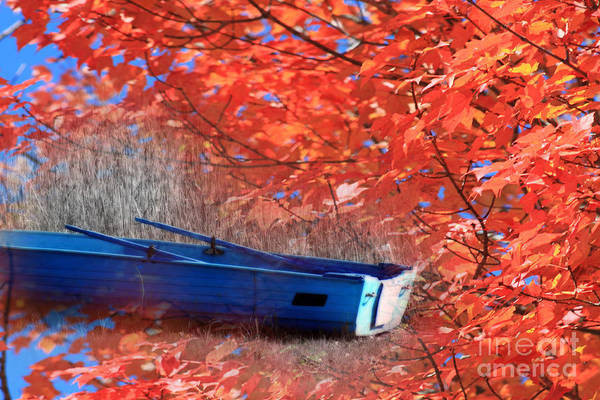 Photograph - A Neighbours Boat by Cathy Beharriell