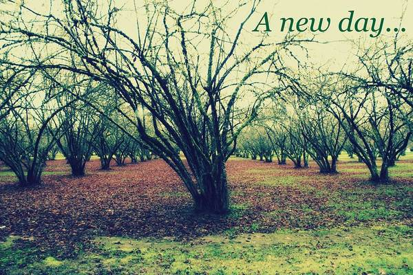 Orchard Digital Art - A New Day... by Cathie Tyler