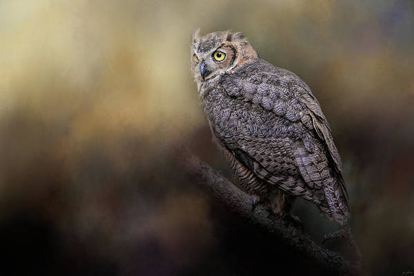 Photograph - A Night With The Great Horned Owl 2 By Jai Johnson by Jai Johnson