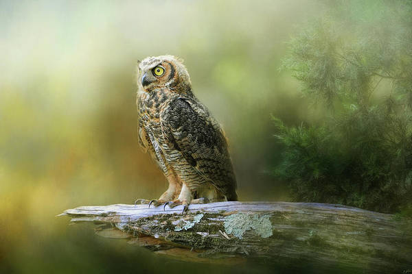 Photograph - A Night With The Great Horned Owl 3 By Jai Johnson by Jai Johnson