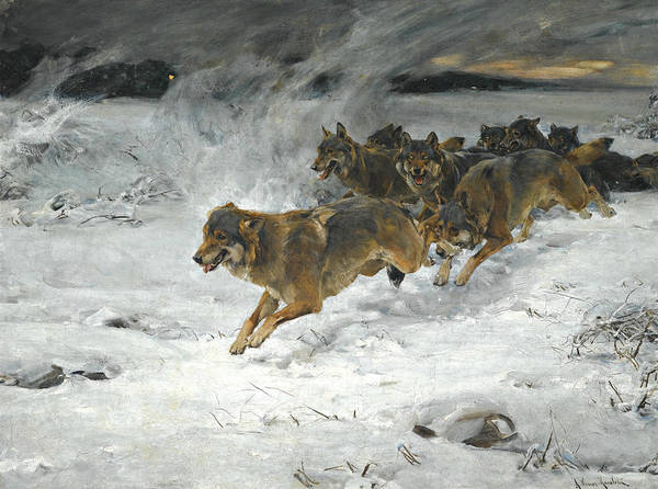 Painting - A Pack Of Wolves by Alfred Kowalski