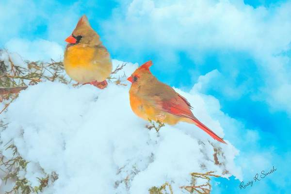 Digital Art - A Pair Of Cardinals Perched On Snowy Branch. by Rusty R Smith