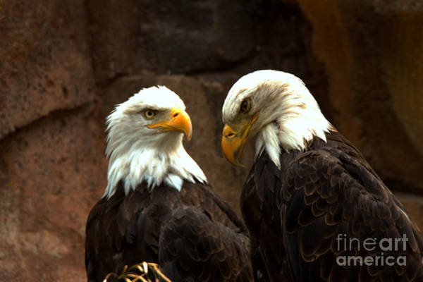 Photograph - A Pair Of Eagles by Adam Jewell