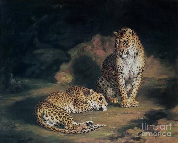 Beautiful Cats Wall Art - Painting - A Pair Of Leopards by William Huggins