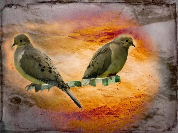 Digital Art - A Pair Of Mourning Doves by Rusty R Smith