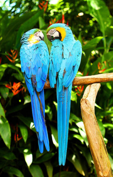 Photograph - A Pair Of Parrots by Marilyn Hunt