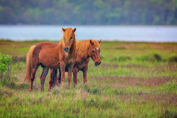 Photograph - A Pair Of Ponies by Rick Berk