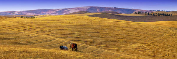 Photograph - A Palouse Panorama by David Patterson