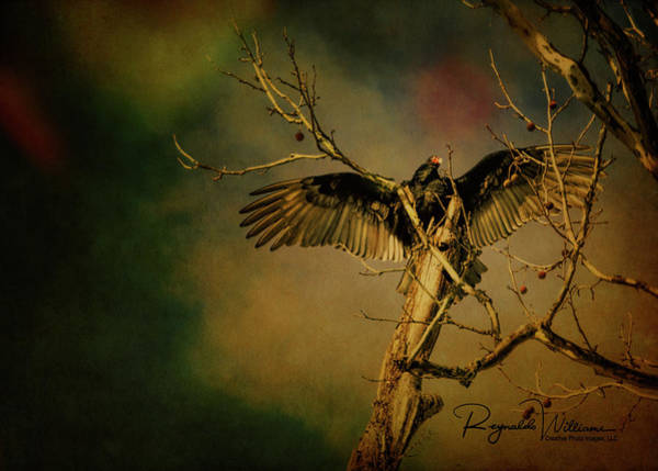 Photograph - A Part In The Circle Of Life by Reynaldo Williams