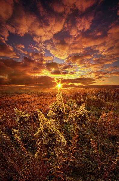 Photograph - A Part Of Everything by Phil Koch