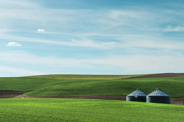 Photograph - A Pastoral Scene From Palouse. by Usha Peddamatham