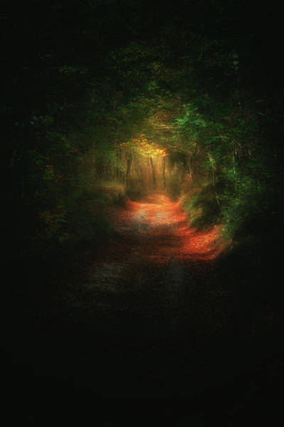 Photograph - A Path In The Dark by Mikel Martinez de Osaba